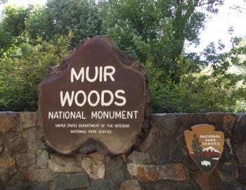 Muir Woods and Sausalito Half Day Tour (Optional Sausalito Ferry Ticket)